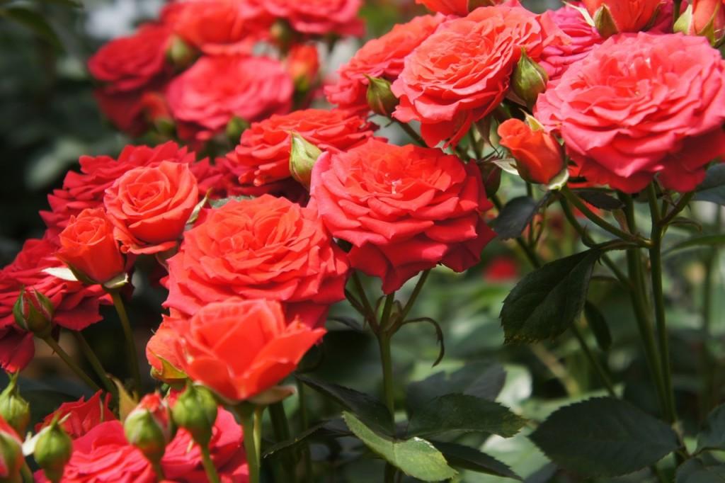 Foto: Flickr T.Kiya Lizenz: creativecommons.org